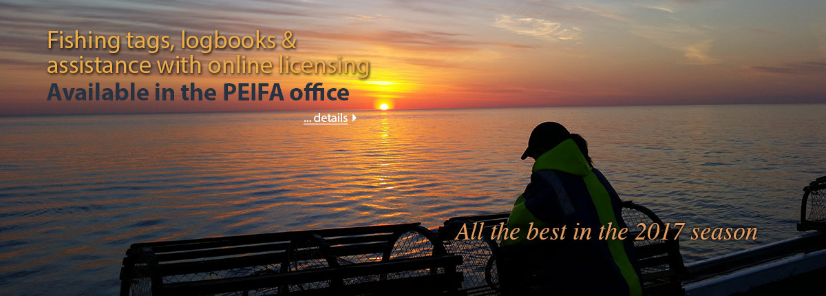 Fishing tags, logbooks and assistance with online licensing